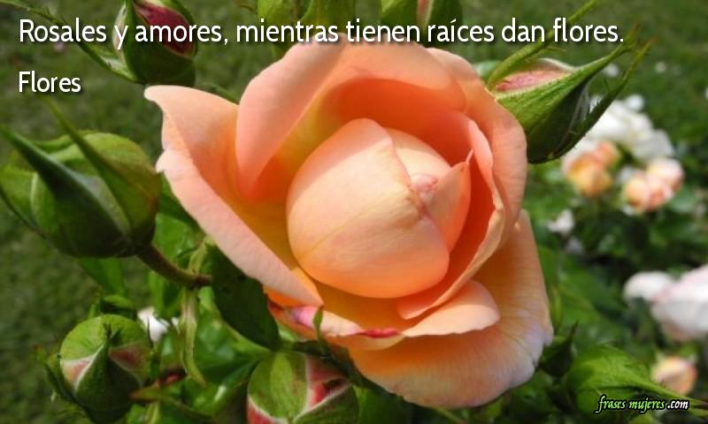 Frases De Flores Frases De Mujeres
